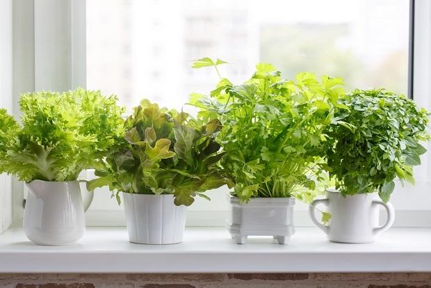 Botanical Gardens - Grow your own