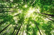 Image for sustainability case study