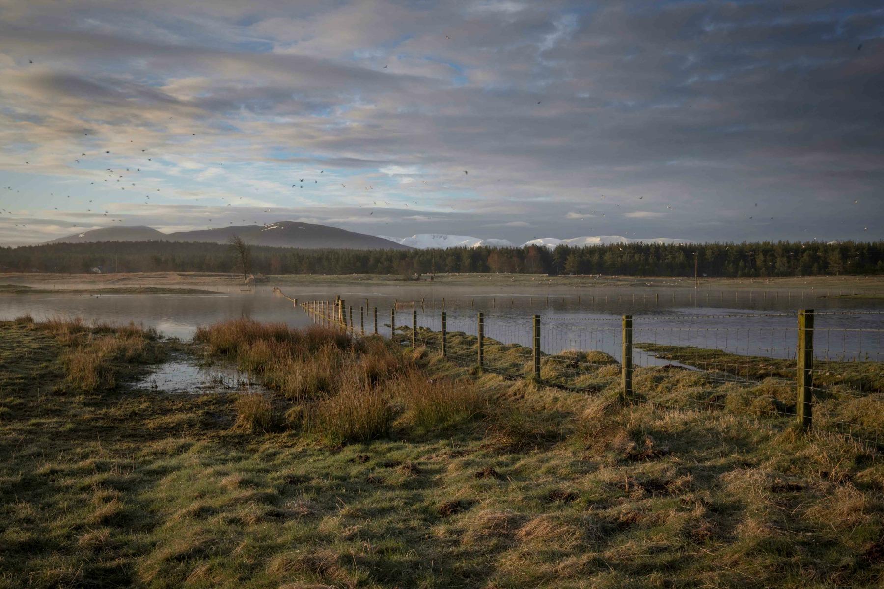 Caledonian Dawn