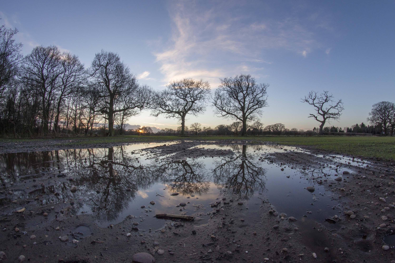 Forgotten Oak