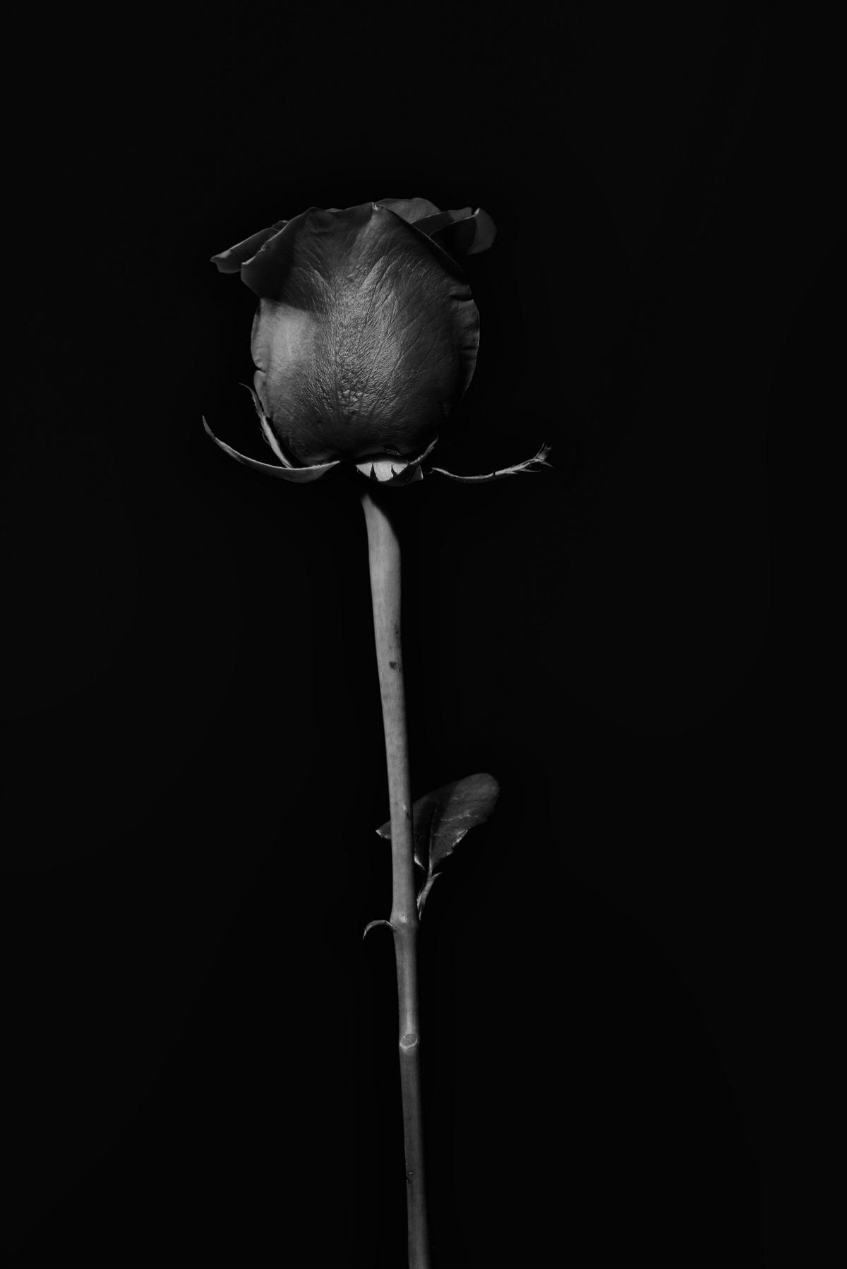 Emma Pitt 01