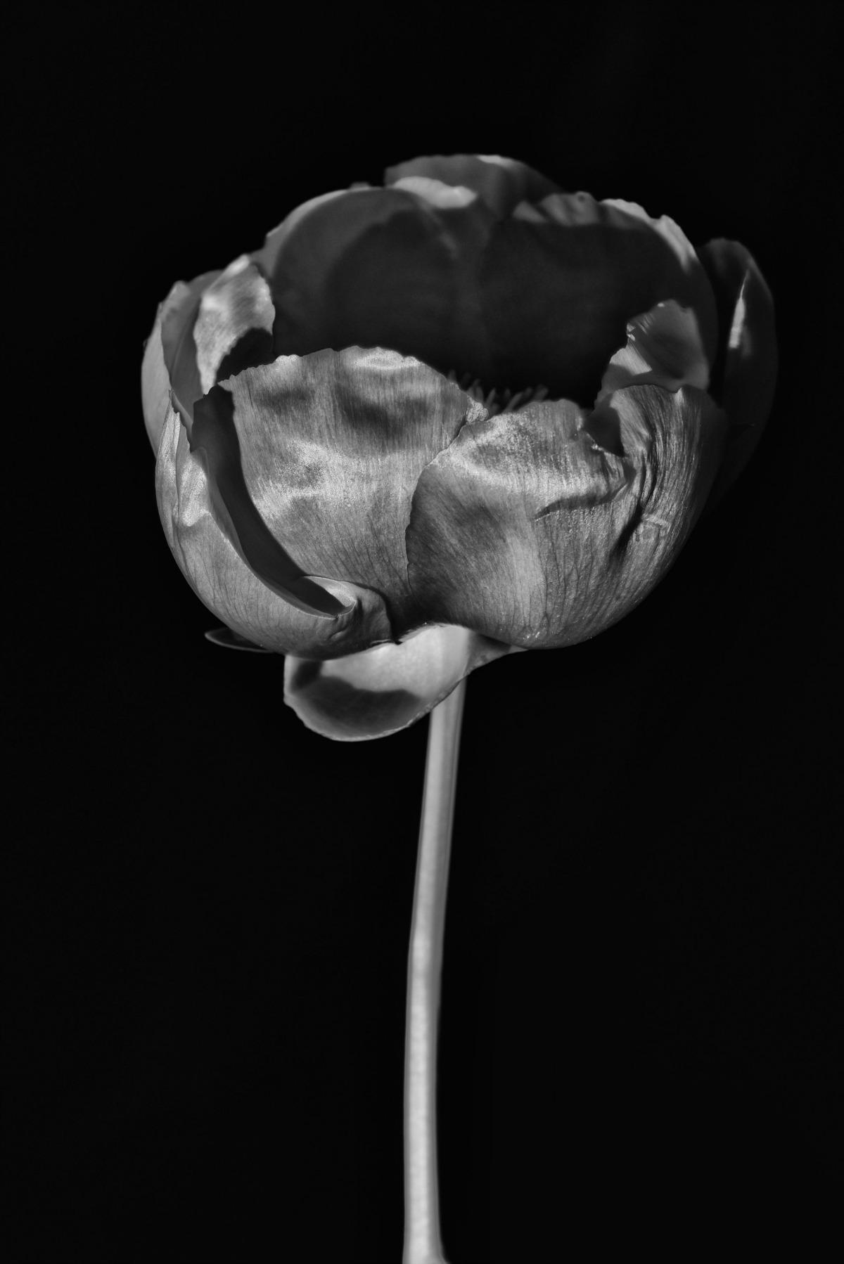 Emma Pitt 04