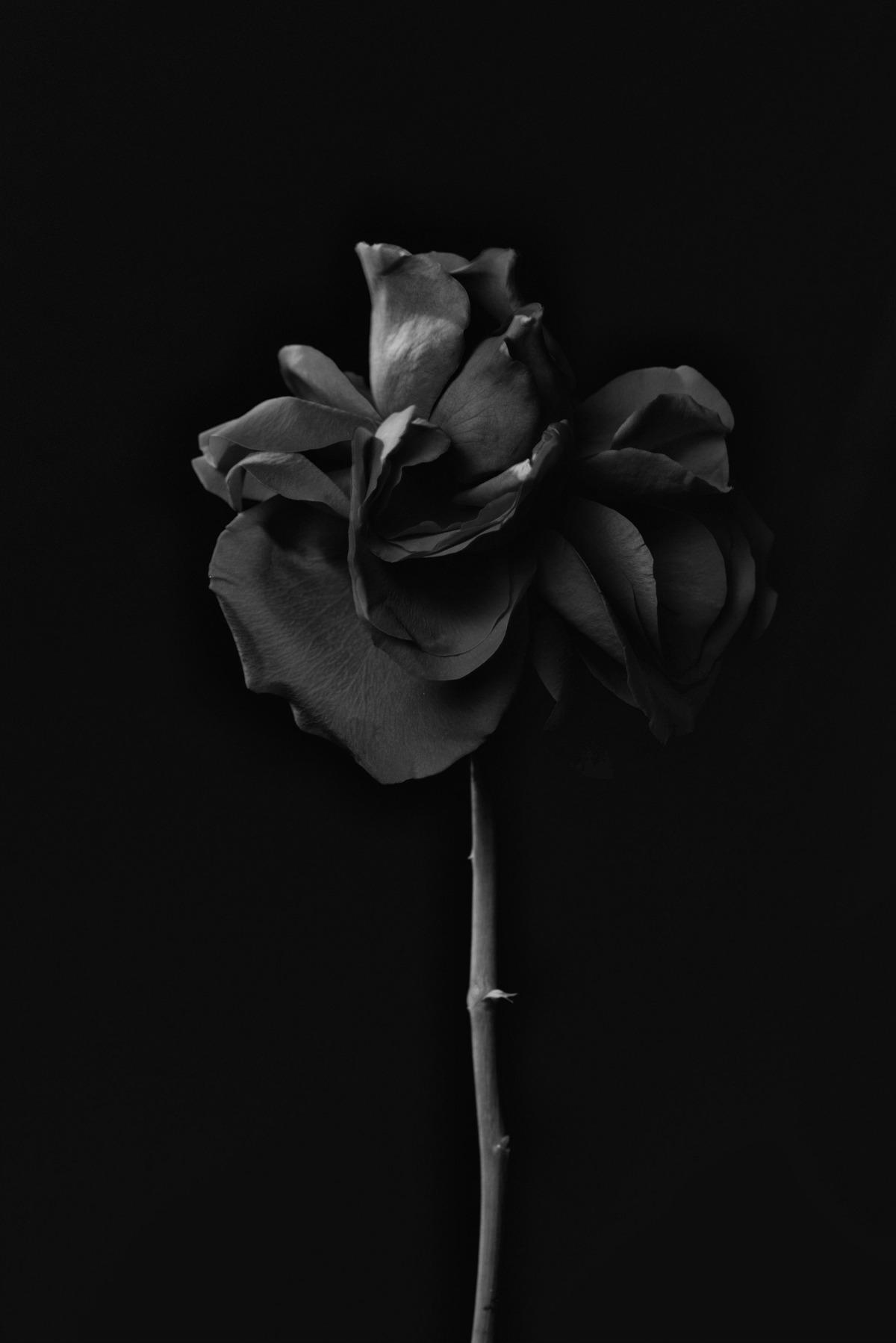Emma Pitt 08