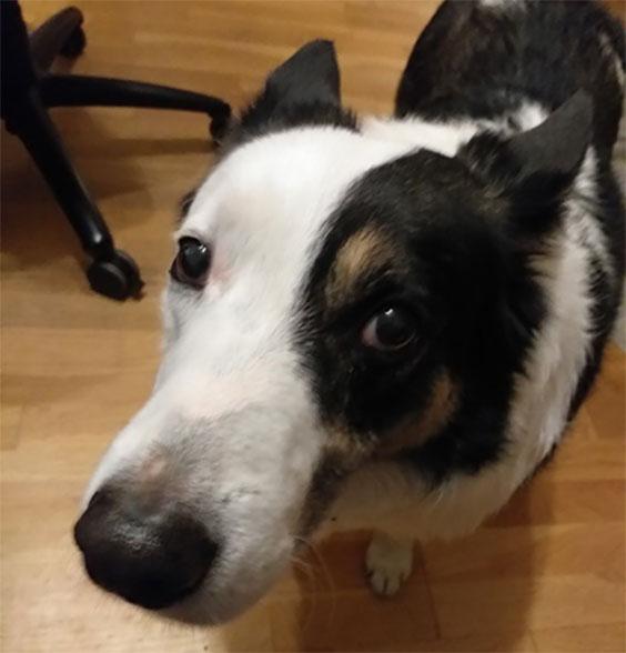 Frank the dog