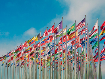 Centre for Human Rights HP Image 350x263 - Flags