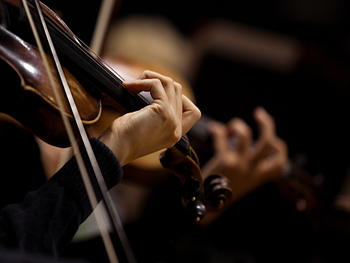 Violin news